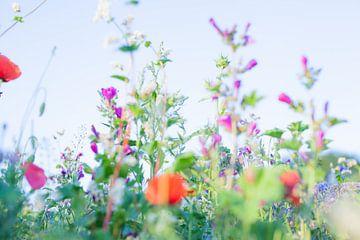 Wilde Sommerblumen 03 von FotoDennis.com