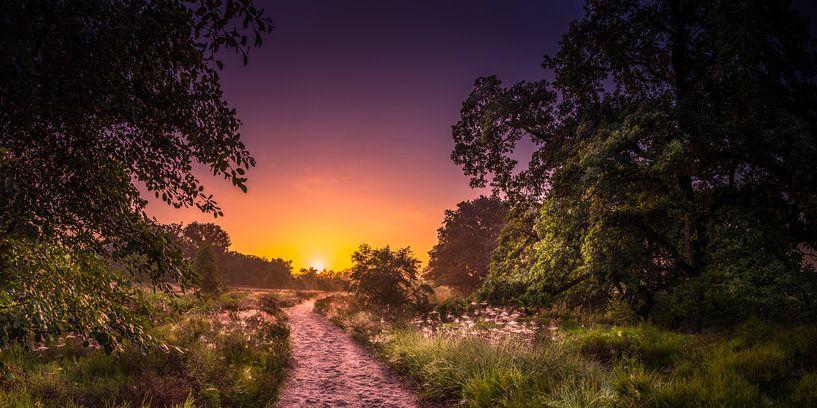 Zonsopgang nationaal park Sallandse heuverug van Martijn van Steenbergen