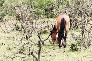 Paard II