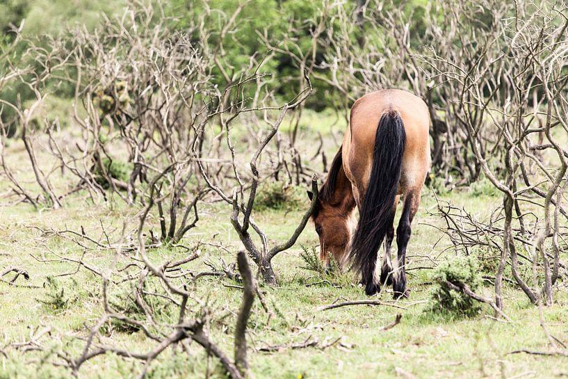 Paard II van Irene Hoekstra