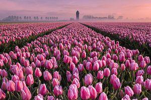Tulpenveld op een mistige ochtend van Sander Groenendijk