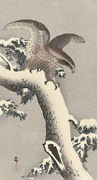 Arend op besneeuwde pijnboom van Ohara Koson