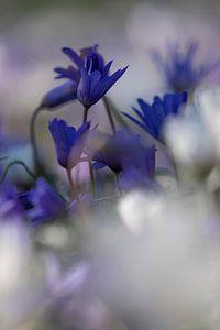 Keukenhof bloemen Paars 2 van Antine van der Zijden