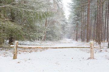 Winters bos van Peter van Rooij
