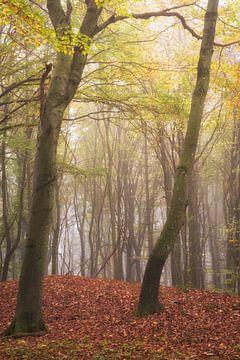 Bezaubernde alte Bäume im Nebel von Tobias Luxberg