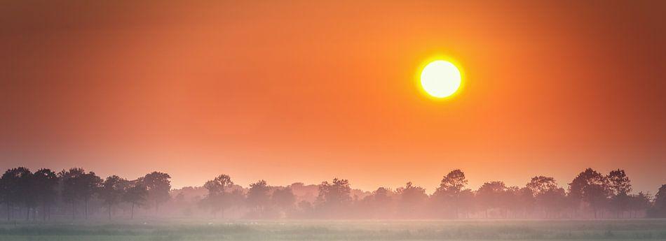 Oranje Boven! van Martijn van Dellen