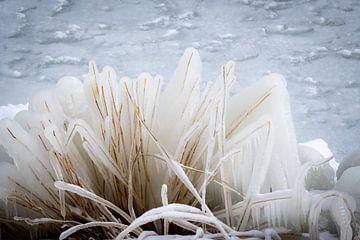 Bevroren riet langs het Markermeer van Marjolein Spek-Sluijs