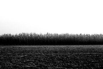 Abstraktes Schwarz-Weiß-Bild Natur von Linsey Aandewiel-Marijnen