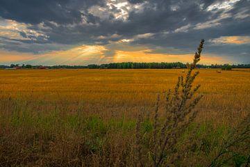 Twilight rays over the Swedish fields sur