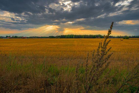 Schemerstralen, Zweedse velden