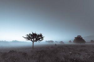Strabrechtse Heide 209