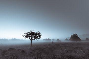 Strabrechtse Heide 209 von Desh amer