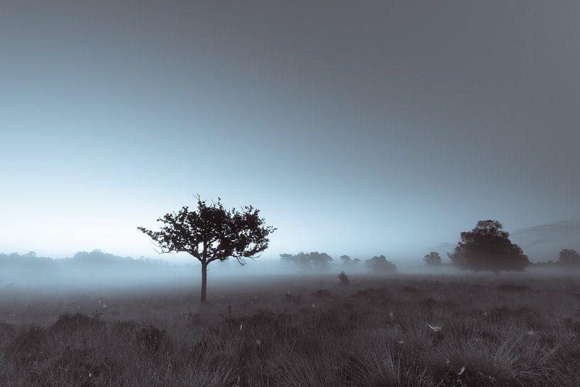 Strabrechtse Heide 209 van Deshamer