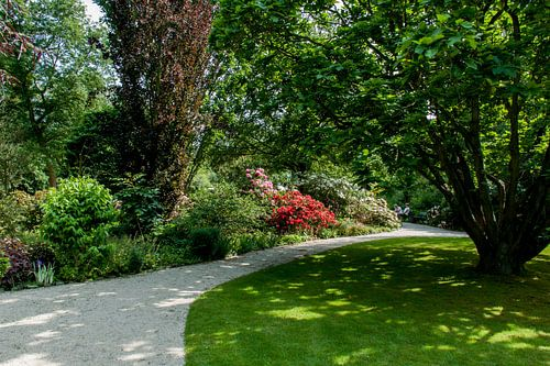 Botanische Tuin Rotterdam : Trompenburg tuinen arboretum op canvas behang en meer bestellen