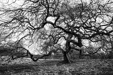 Grillige boom van Albert Mendelewski