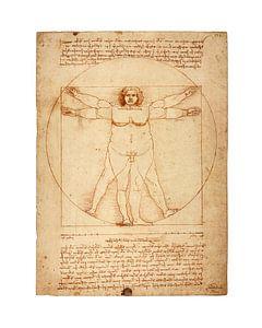 Dikke versie Vitruvius Leonardo Da Vinci