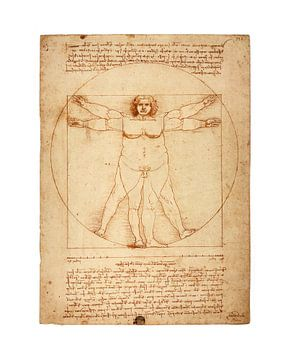 Dicke Ausführung Vitruv Leonardo Da Vinci von Peter Hermus
