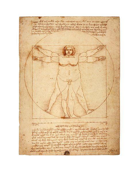 Dikke versie Vitruvius Leonardo Da Vinci van Peter Hermus