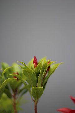 Flowers von Selma Hamzic
