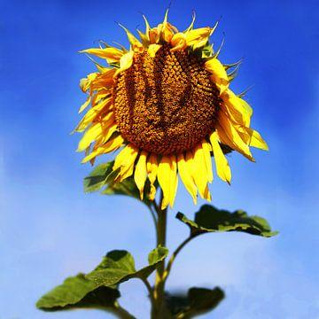 The Smiling Sunflower  von Sandra Akkerman
