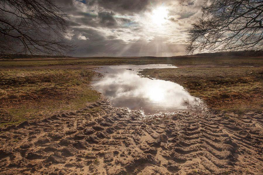 Open vlakte met waterpoel in tegenlicht