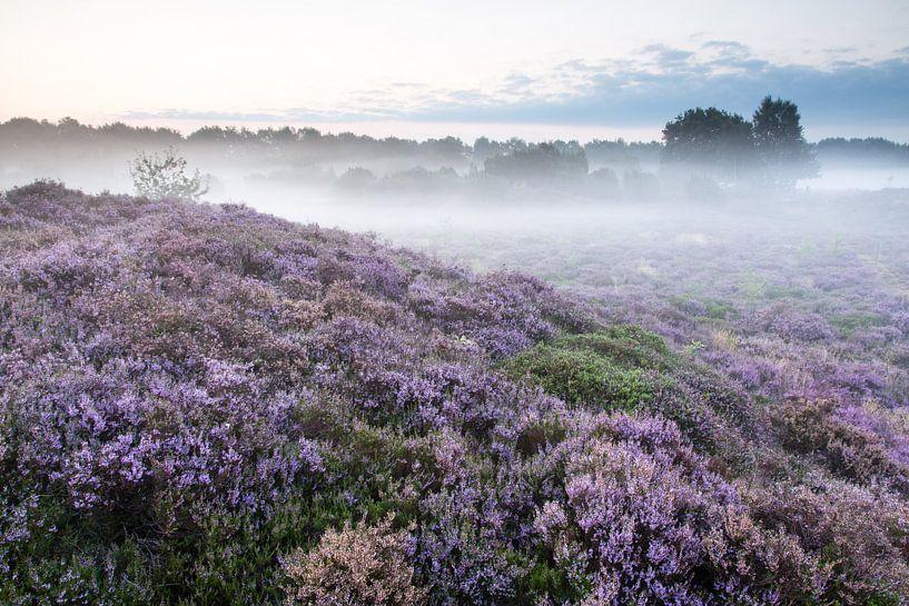 Heuvelachtig heidelandschap sur Anneke Hooijer