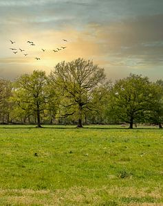 Bäume von Connie de Graaf
