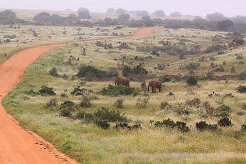 Afrikanische Landschaft mit Elefanten Südafrika von Bobsphotography