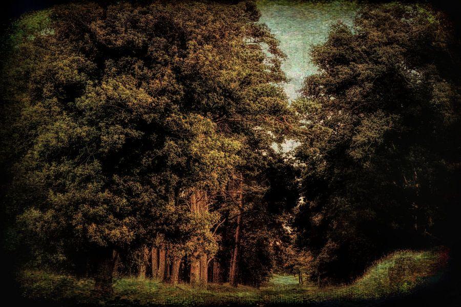 het donkere bos van Yvonne Blokland