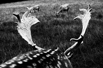 Schwarzes und weisses Hirschgeweih im Parc à Gibier de La Roche von Paul van Putten