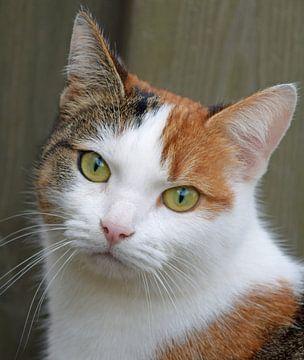 Porträt eines Kopfes einer getigerten Katze / Tabby-Katze von Robin Verhoef