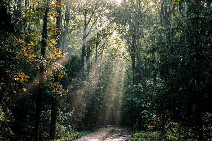 Strijklicht in Amsterdamse bos van Romy Oomen