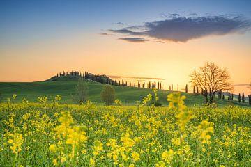 Zonsopkomst boven de heuvels in Toscane met een Toscaanse villa op de achtergrond en mooie gele bloe van Bas Meelker