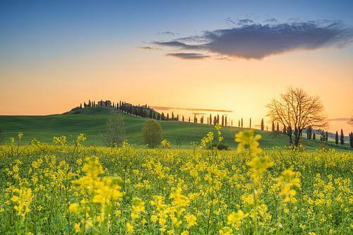 Zonsopkomst boven de heuvels in Toscane met een Toscaanse villa op de achtergrond en mooie gele bloe