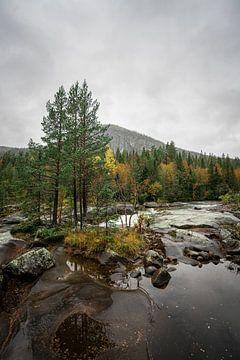 Bos en rivier in zuid Noorwegen van Mickéle Godderis
