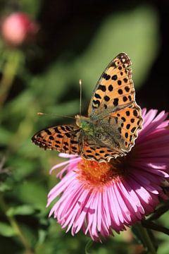 butterfly van Klaus-Dieter Schulze