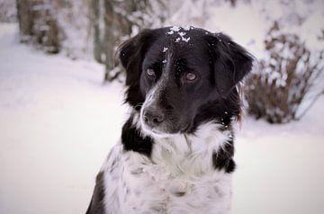 Hund im Schnee / Hund im Schnee von Henk de Boer