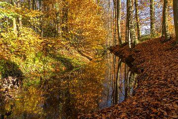 Herfst in het bos van Peter Schickert