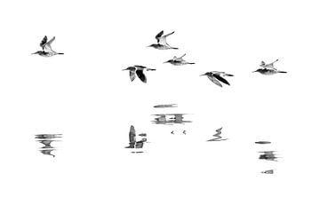 Vogelvlucht van Anja Brouwer Fotografie