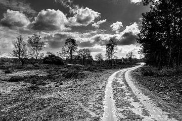 Kootwijker Sand schwarz-weiß von Tessa Louwerens