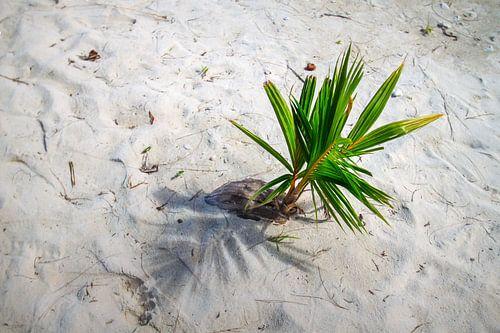 Coconut bliss - growing wild van