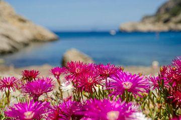 Bloemen aan de baai van Sant Miquel van