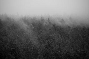 Forrest in the Mist #3 von Floris Kok