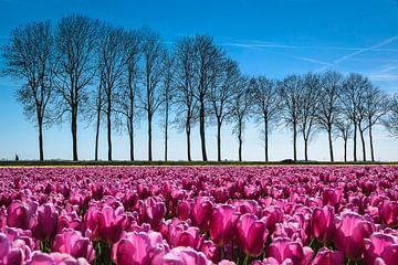Printemps dans le polder sur Rietje Bulthuis