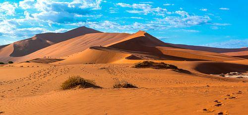 De rode duinen van de Sossusvlei in de ochtendzon, Namibië