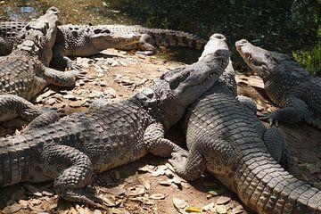 krokodil von Bart Cornelis de Groot