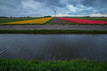 Tulpenbollenvelden in Noord Holland van Jeroen Stel