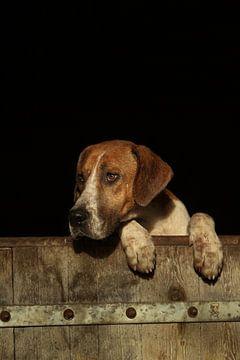 Mag ik naar buiten? Hond met poten op rand van de deur van Caroline van der Vecht