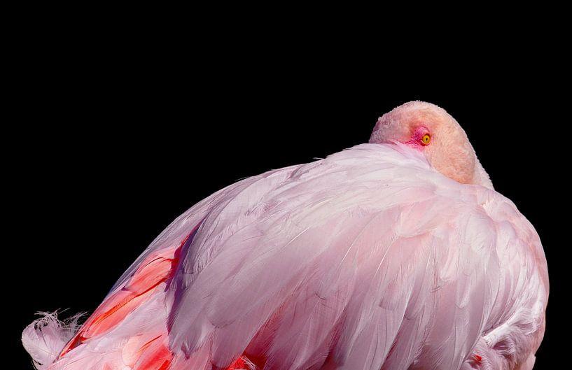 Flamingo in rust van Karin aan de muur