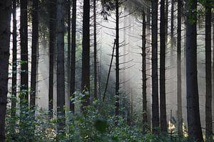 Zonnestralen in mysterieus sprookjesachtig bos van